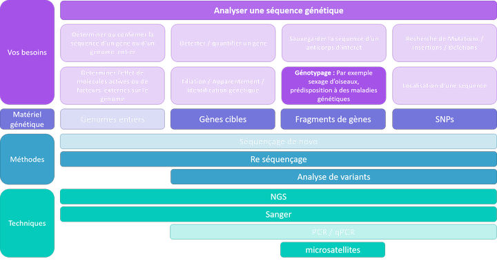Analyser une séquence - génotypage