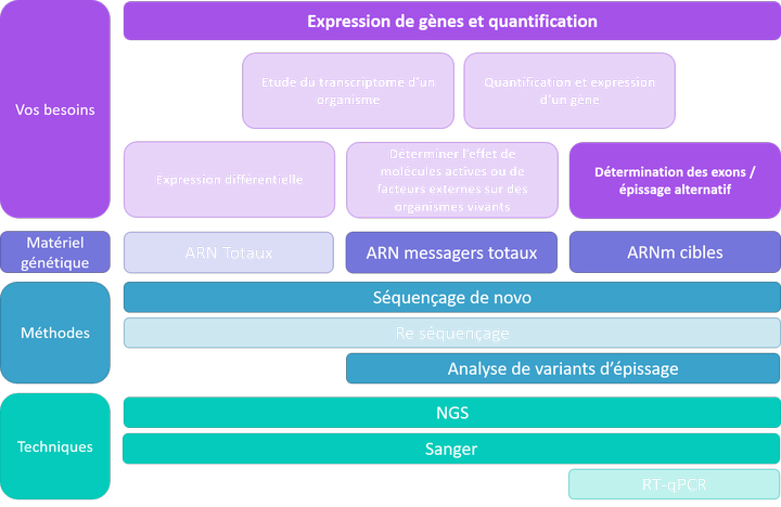 Expression et quantification - exons et épissage alternatif