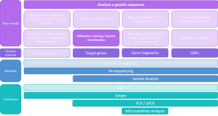 Analyse a genetic sequence - Affiliation / Pairing / Genetic identification